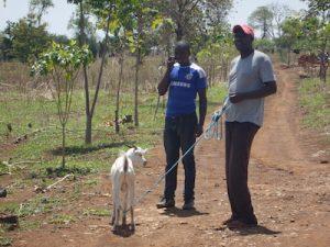 Buying goat