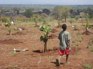 Farajah engagerar sig i alla gårdens sysslor, han gillar att vara med och bygga sitt framtida hem.