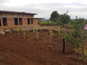 Infiltration för svartvatten med bananplantor